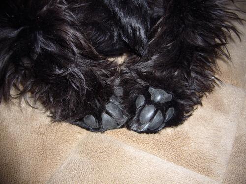 Kaiの足